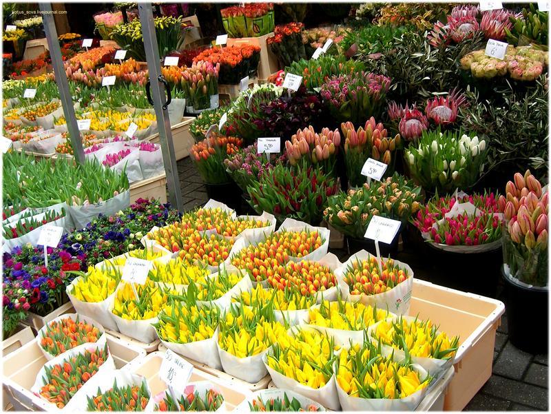 Автоматизация розничной торговли растениями